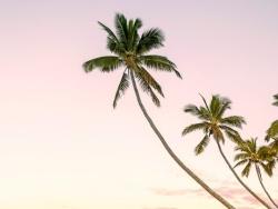 全国椰子半海南