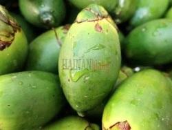 海南人很爱嚼槟榔吗?